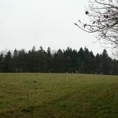 Lesy Mikulášovice